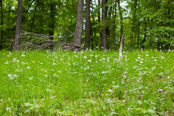Printemps forêt tapis sol vert plantes Photo stock © hraska