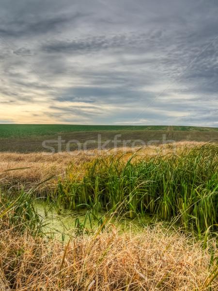 Marsh vegetation Stock photo © hraska