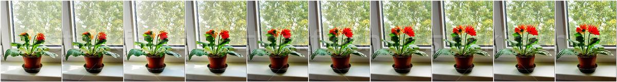 Fiore mattina risveglio set dieci fotografie Foto d'archivio © hraska