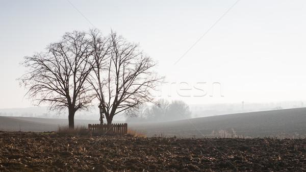 Campagna view alberi solitaria legno Foto d'archivio © hraska