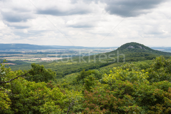 Carpathian mountains and forests Stock photo © hraska
