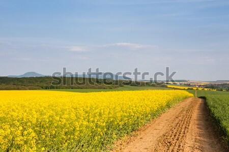 Dirt road passing through rapeseed field Stock photo © hraska
