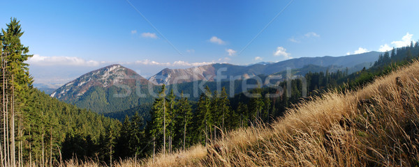 Mountains growing stages Stock photo © hraska
