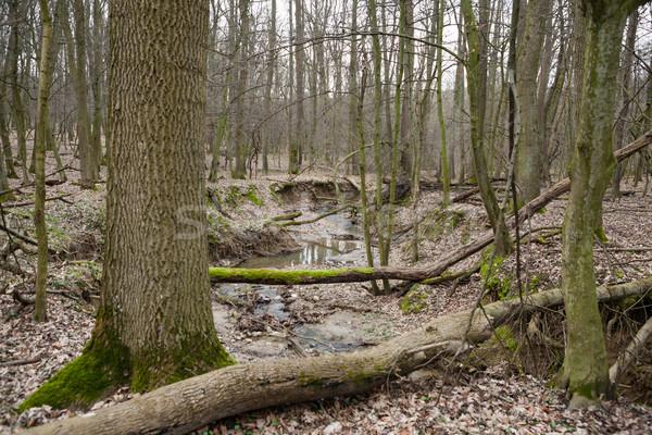 Rejtett erdő folyam lombhullató törött moha Stock fotó © hraska