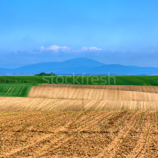 Fertile sol agronomie paysage belle montagne Photo stock © hraska