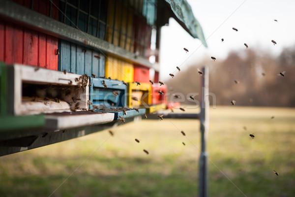 Uçan kovan bal arılar bahar adam Stok fotoğraf © hraska