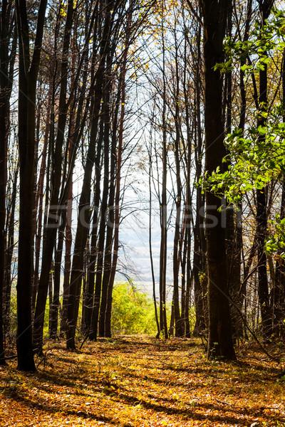 Forest pathway Stock photo © hraska