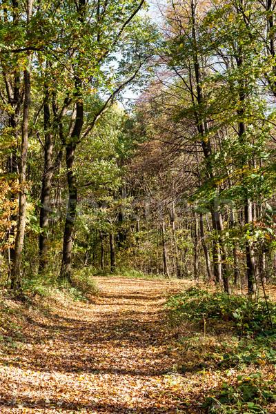 Road through the forest Stock photo © hraska