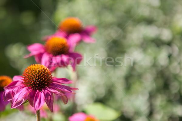 Fioritura fiori verde giardino bellezza colore Foto d'archivio © hraska