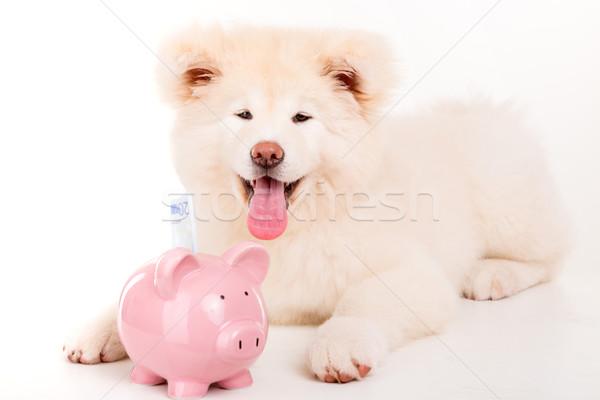 Bella cane posa studio sfondo bellezza Foto d'archivio © hsfelix