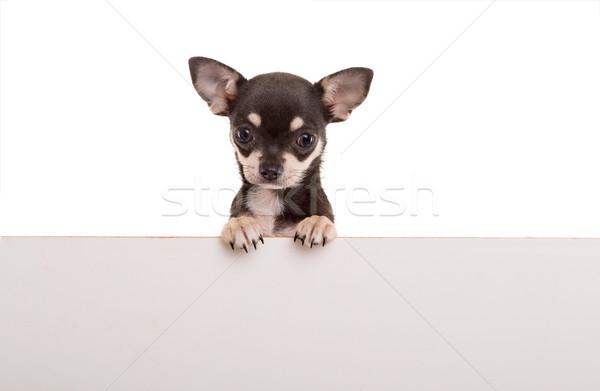 Kutyakölyök fölött fehér szalag izolált papír Stock fotó © hsfelix