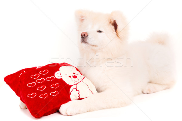 Stok fotoğraf: Sevgililer · günü · çiçek · sevmek · mutlu · kırmızı · hayvanlar