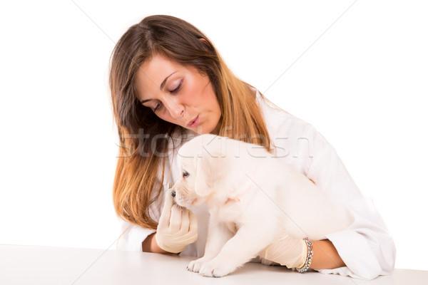 Stok fotoğraf: Veteriner · güzel · golden · retriever · köpek · yavrusu · kadın · köpek