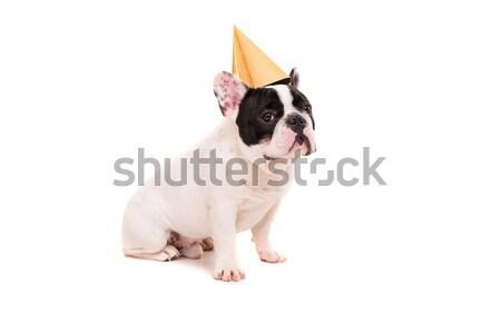 Francês buldogue cachorro seis Foto stock © hsfelix