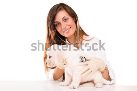 ветеринар красивой Золотистый ретривер щенков ребенка собака Сток-фото © hsfelix