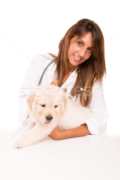 Medicul veterinar frumos golden retriever căţeluş copil câine Imagine de stoc © hsfelix