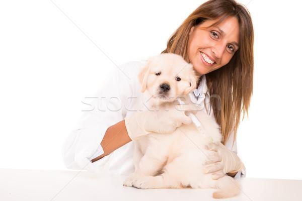 Dierenarts mooie golden retriever puppy baby hond Stockfoto © hsfelix