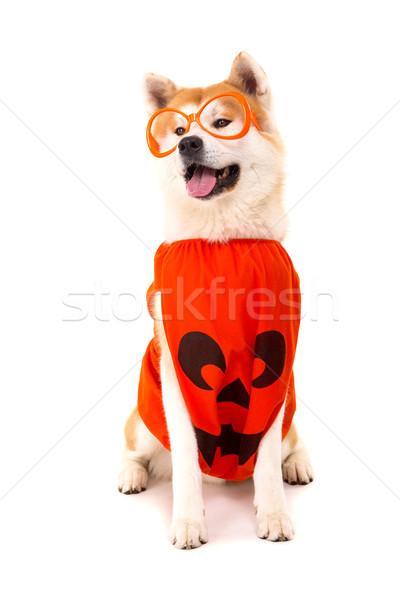Bella cane carnevale halloween natura bianco Foto d'archivio © hsfelix