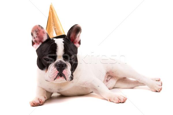 Stok fotoğraf: Fransız · buldok · köpek · yavrusu · şapka