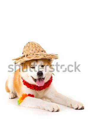 Stockfoto: Mooie · hond · klaar · zomer · natuur
