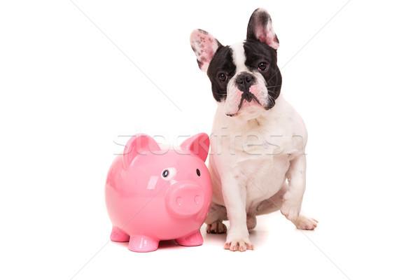 Francia bulldog takarékosság pénz kutyakölyök nyaralások Stock fotó © hsfelix
