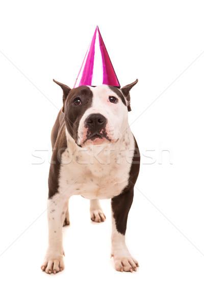 Staffordshire terrier baba visel ünnepi kalap buli Stock fotó © hsfelix