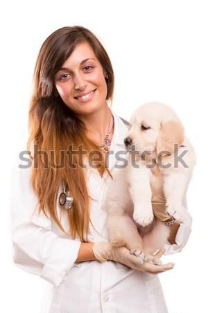 Lekarz weterynarii piękna golden retriever szczeniak kobieta psa Zdjęcia stock © hsfelix