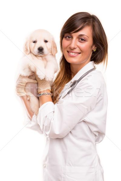 Veterinario bella golden retriever cucciolo donna cane Foto d'archivio © hsfelix