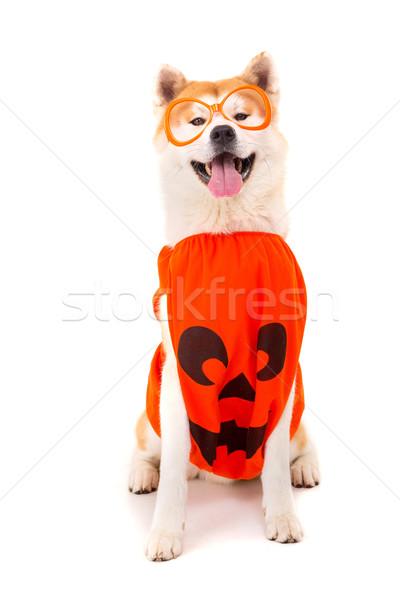 Bella cane carnevale halloween bianco japanese Foto d'archivio © hsfelix