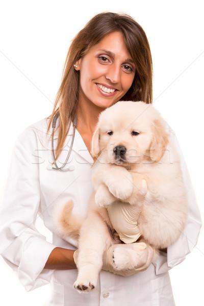 állatorvos gyönyörű golden retriever kutyakölyök nő kutya Stock fotó © hsfelix