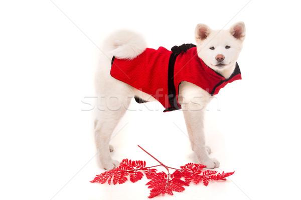 Valentin nap virág szeretet boldog piros állatok Stock fotó © hsfelix