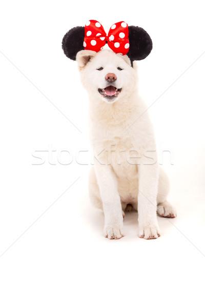 Güzel köpek karnaval halloween arka plan beyaz Stok fotoğraf © hsfelix