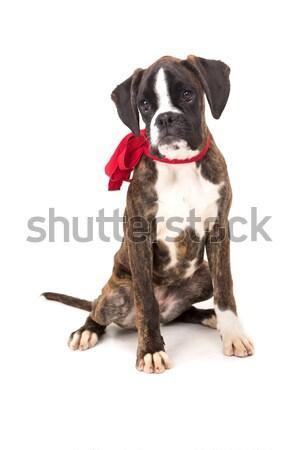 Boxoló valentin nap baba szeretet háttér szomorú Stock fotó © hsfelix