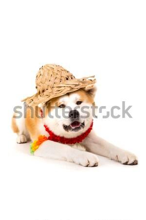 Bella cane pronto estate vacanze bianco Foto d'archivio © hsfelix