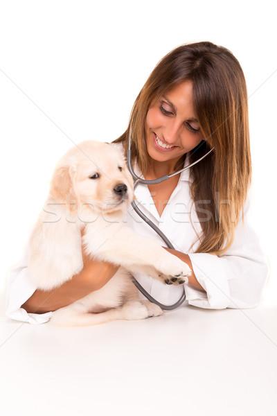 Veterinarian Stock photo © hsfelix