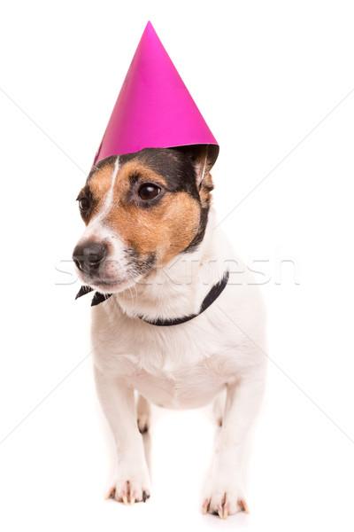 Jack russell kutyakölyök visel ünnepi kalap izolált Stock fotó © hsfelix