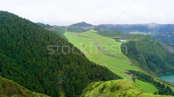 Forest - Azores, Portugal Stock photo © hsfelix