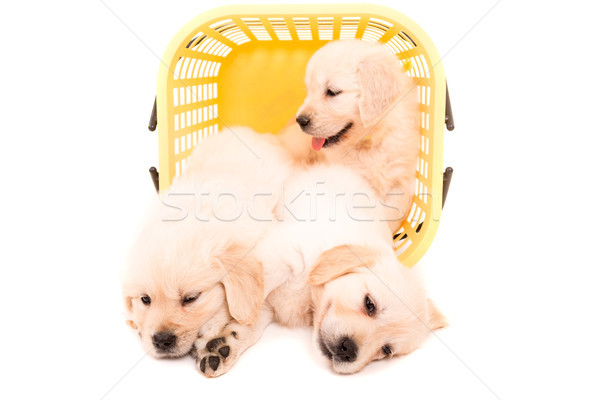 Gouden studio foto baby geïsoleerd witte Stockfoto © hsfelix