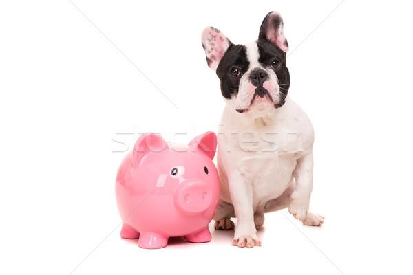 Francês buldogue dinheiro cachorro férias Foto stock © hsfelix