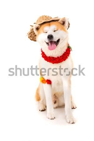 Bella cane pronto estate vacanze ritratto Foto d'archivio © hsfelix