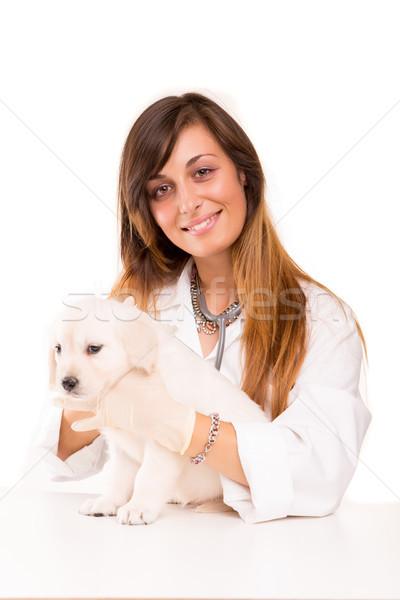 állatorvos gyönyörű golden retriever kutyakölyök baba kutya Stock fotó © hsfelix