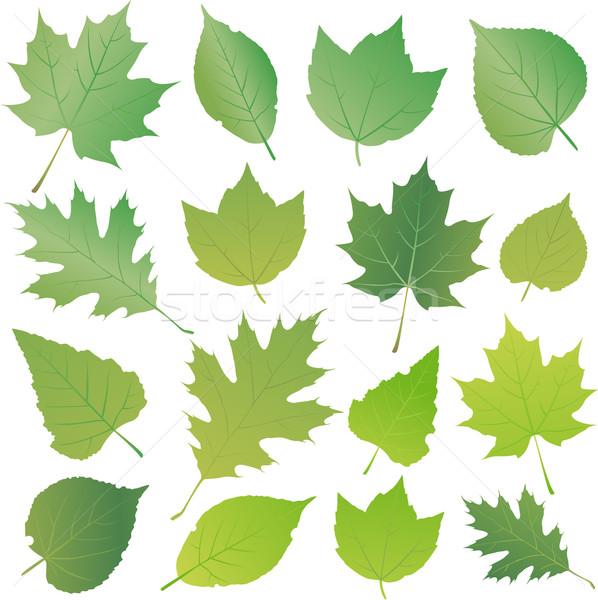 Zöld levél gyűjtemény szett izolált fehér fa Stock fotó © hugolacasse