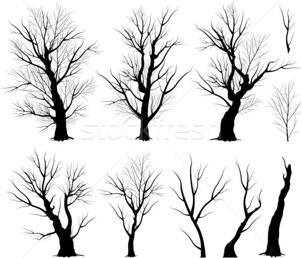 Arrepiante árvore preto Foto stock © hugolacasse