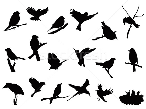 bird silhouettes collection Stock photo © huhulin