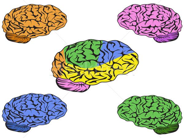 Renk beyin vektör dizayn vücut sağlık Stok fotoğraf © huhulin