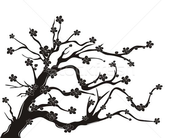 Flor de cereja árvore silhueta branco beleza folhas Foto stock © huhulin