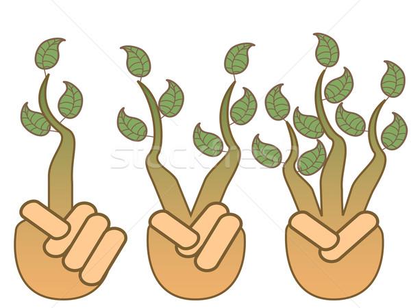 Yeşil yaprak büyüyen eller yalıtılmış beyaz el Stok fotoğraf © huhulin