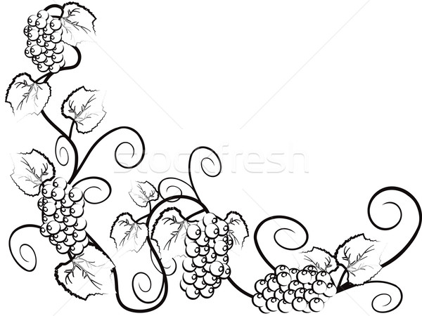 Сток-фото: винограда · винограда · копия · пространства · вино · фрукты · искусства