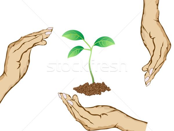 Zdjęcia stock: Ręce · zielone · roślin · tle · ziemi · dłoni