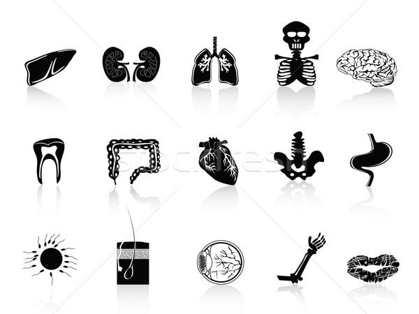 Preto anatomia humana humanismo ícone Foto stock © huhulin